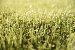 Beschaffenheit des grünen Grases Stockfotos
