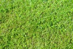 Beschaffenheit des grünen Grases Lizenzfreies Stockfoto