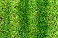 Beschaffenheit des grünen Grases für Hintergrund Stockfoto