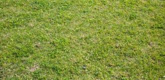 Beschaffenheit des grünen Grases, Hintergrund, Nahaufnahmeansicht mit Details Lizenzfreie Stockfotografie