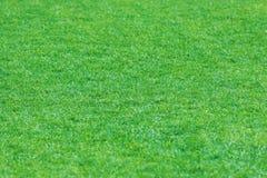 Beschaffenheit des grünen Grases mit Feld Stockfotografie