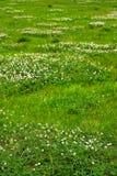 Beschaffenheit des grünen Grases von einem Feld Stockbilder