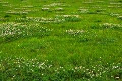 Beschaffenheit des grünen Grases von einem Feld Lizenzfreies Stockfoto