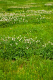 Beschaffenheit des grünen Grases von einem Feld Stockfoto