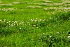 Beschaffenheit des grünen Grases von einem Feld Stockbild
