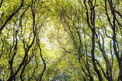 Beschaffenheit des grünen Waldes und der Niederlassung vom Baum mit Sonnenlicht Lizenzfreie Stockfotografie