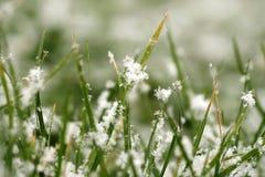 Beschaffenheit des Grases mit Schnee Stockbilder