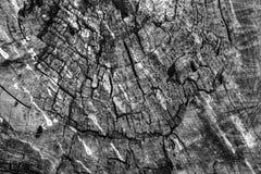 Beschaffenheit des Holzes mit einem natürlichen Muster Lizenzfreies Stockfoto