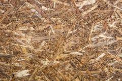 Beschaffenheit des Holzes mit einem natürlichen Muster furnier-blatt Stockfoto
