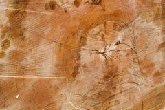 Beschaffenheit des Holzes Sägeschnitt von einem Baum Stockfoto