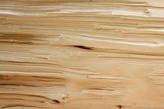 Beschaffenheit des Längsbruches des Baums Stockbilder