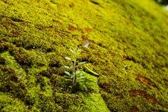 Beschaffenheit des moosigen Felsens mit Blättern Lizenzfreie Stockfotos