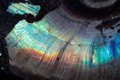 Beschaffenheit des natürlichem unbehandeltem Perlenammonitmakro lizenzfreies stockfoto