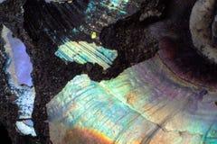 Beschaffenheit des natürlichem unbehandeltem Perlenammonitmakro stockfoto