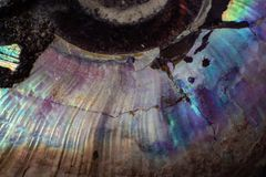 Beschaffenheit des natürlichem unbehandeltem Perlenammonitmakro stockfotos
