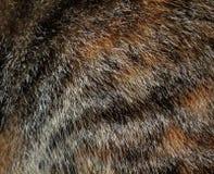 Beschaffenheit des Pelzes der Katze Lizenzfreie Stockbilder