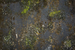 Beschaffenheit des schwarzen konkreten und grünen Mooses des Schmutzes Lizenzfreies Stockbild