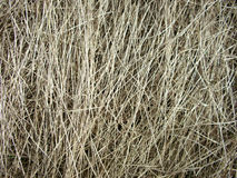 Beschaffenheit des trockenen Grases Stockfoto