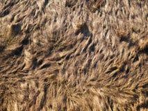Beschaffenheit des trockenen Grases von der Draufsicht stockfotografie