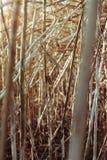 Beschaffenheit des trockenen hohen Grases gegen den Sonnenuntergang lizenzfreies stockbild