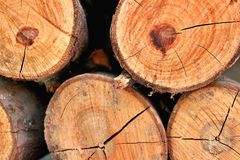 Beschaffenheit des trockenen Holzes für den Kamin stockfotografie