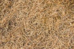 Beschaffenheit des trockenen Strohs auf Ackerland als Hintergrund Stockfoto