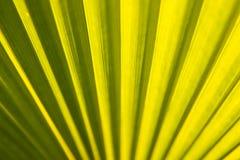 Beschaffenheit des tropischen Blattes Stockfotografie