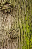 Beschaffenheit einer Baumrinde mit grünem Moos stockfotografie