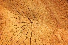 Beschaffenheit eines alten Baums des Schnittes Stockbild