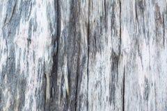 Beschaffenheit eines alten hölzernen Klotzes mit Sprüngen Lizenzfreies Stockbild