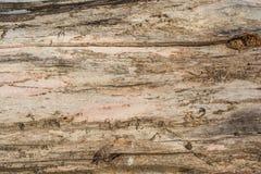 Beschaffenheit eines alten hölzernen Klotzes mit Sprüngen Stockfotografie