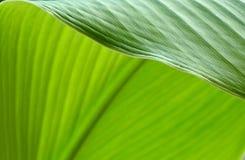 Beschaffenheit eines grünen Blattes als Hintergrund Lizenzfreies Stockbild