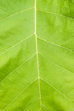 Beschaffenheit eines grünen Blattes als Hintergrund Lizenzfreie Stockfotos