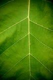 Beschaffenheit eines grünen Blattes als Hintergrund Stockbilder