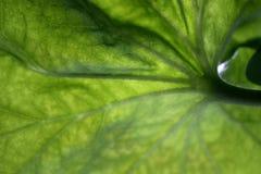 Beschaffenheit eines grünen Blattes als Hintergrund stockbild