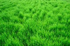 Beschaffenheit eines grünen hohen Grases Lizenzfreie Stockfotos