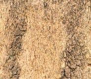 Beschaffenheit eines Holzes vom Baum Stockbild