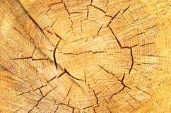 Beschaffenheit eines Sägeschnittes eines Klotzes Der gesägte Baum und seine Jahrringe Stockfoto