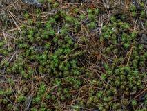 Beschaffenheit eines Waldbodens Stockfotografie