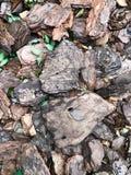 Beschaffenheit/Hintergrund von braunen Stücken der Baumrinde frech stockfotografie