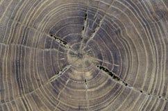 Beschaffenheit im Holz einer Baumulme, abstrakt Stockfotos