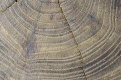 Beschaffenheit im Holz einer Baumulme, abstrakt Lizenzfreies Stockbild