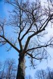 Beschaffenheit mit Baumast auf einem Hintergrund des blauen Himmels stockfotos