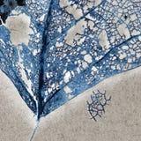 Beschaffenheit mit faulen Blättern mit Fasern Lizenzfreies Stockbild