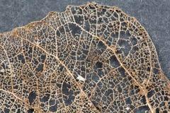 Beschaffenheit mit faulen Blättern mit Fasern von einem Blatt Stockfoto