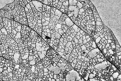 Beschaffenheit mit faulen Blättern mit Fasern von einem Blatt Stockfotos