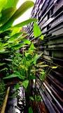 Beschaffenheit mit grünem Baum Stockbilder