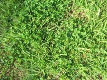 Beschaffenheit mit Gras Lizenzfreies Stockbild