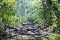 Beschaffenheit Nationalparks Gunung Mulu von Sarawak, Malaysia lizenzfreies stockfoto