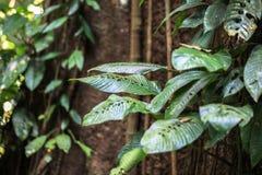 Beschaffenheit Nationalparks Gunung Mulu von Sarawak, Malaysia stockbild